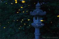ヒメボタルと石灯篭.2 - 遥かなる月光の旅