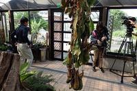 取材!! - 手柄山温室植物園ブログ 『山の上から花だより』