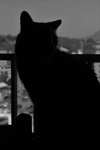 予防法 - ぎんネコ☆はうす