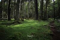 森林浴 - Aruku