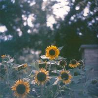 Happy Summer - ∞ infinity ∞