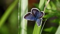 2018信州遠征その1 - 紀州里山の蝶たち