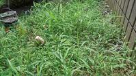 軽く草取り - うちの庭の備忘録 green's garden