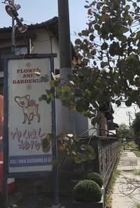 ゆくはし植物園に行きました - *karenのかたりごと*