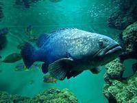 葛西臨海水族園:南シナ海~勇壮!巨大タマカイ - 続々・動物園ありマス。