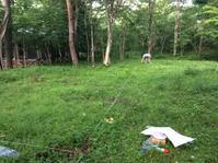 山中湖別荘地@位置出し - 小粋な道草ブログ