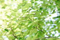 green green - *Any*