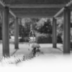 真夏の降霜に思わず水を噴き出したお蛇口さま - Film&Gasoline