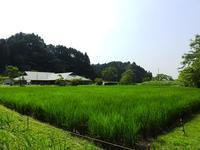 今日も暑い一日 - 千葉県いすみ環境と文化のさとセンター