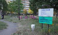 Vol.1364 小田栄2丁目公園 - 小太郎の白っぽい世界