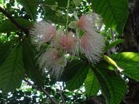 宇治植物園の温室の花 - 彩の気まぐれ写真