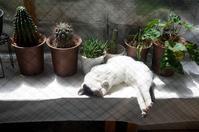 最近の猫事情56 - 鳥会えず猫生活