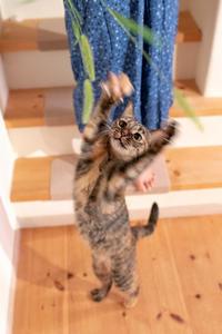 晩ご飯前のひと遊び - 猫と夕焼け