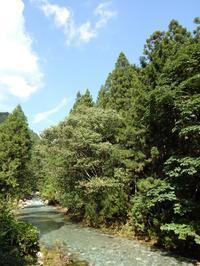 『円原川の伏流水は見られませんでしたが・・・・・』 - 自然風の自然風だより