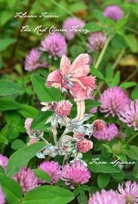 妖精たちの花便り「植物を描く」~植物画家・芝田美智子さんをお迎えして~ - Fiore Spazio 花便り