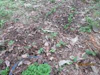 ツバメの子育て - 宮迫の! ようこそヤマボウシの森へ