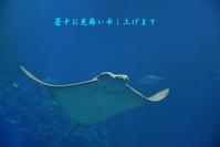 大阪海遊館 - 高原に行きたい