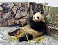 パンダに大接近! - うひひなまいにち