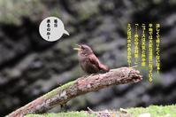 渓谷へ! - Weblog : ちー3歩