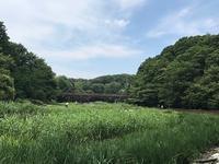 泉の森(7月猛暑) - つれづれ日記
