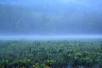 新緑は、かく目覚めし~居谷里湿原~ - 拙者の写真修行小屋