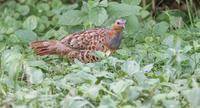 目の前に‥ - 趣味の野鳥撮影