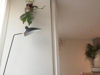 我が家のグリーン事情 - 「暮らしを整え、暮らしを楽しむ」