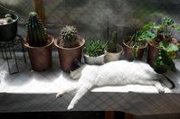 最近の猫事情57 - 鳥会えず猫生活