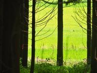 夏の田園風景 - はーとらんど写真感