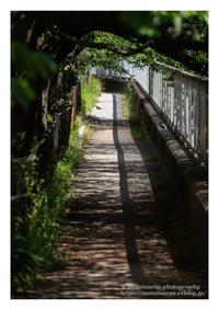 鳩の休む小路 - ♉ mototaurus photography