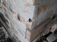 窯詰を邪魔するハチが - 冬青窯八ヶ岳便り