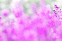 今日のふわラー #367 - ainosatoブログ02