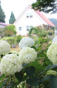 ブッドレア&華麗な脱出劇♪ - HOME SWEET HOME ペコリの庭 *