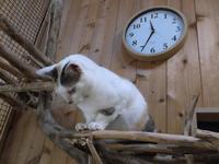 ワールドロックナウ2018/7/29 - シェークスピアの猫