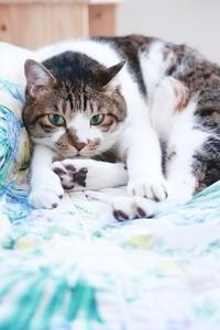 猫がさみしそうに見えることがあっても - きょうだい猫と仲良し暮らし