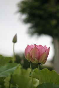 早朝の花 - みるはな写真くらぶ