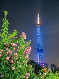 2018.7.14アクア・ブルーの東京タワー - ダイヤモンド△△追っかけ記録