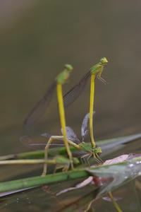連休中のその他いろいろ - 蝶と蜻蛉の撮影日記
