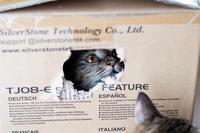 特に人気の段ボール箱 - 猫と夕焼け