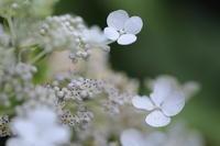 盛夏の葦毛湿原 - ecocoro日和