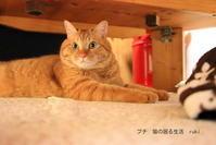 Happy Caturday rukiちゃん - 虹のむこうには何が見える?