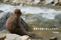大暑 - 相模原・町田エリアの写真サークル「なちゅフォト」ブログ!