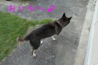 暑いのでお庭遊び - HAMAsumi-Life