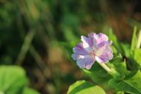 土用の丑の日 - 週刊「目指せ自然農で自給自足」
