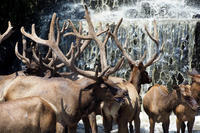 滝とワピチ - 動物園放浪記