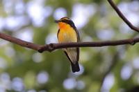 まんまるスズメ幼鳥 - 四十雀の欣幸 ~野鳥写真日記~