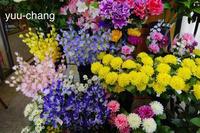 2018.6.10 綺麗な花が並んでいるのは - 下手糞PHOTO BLOG