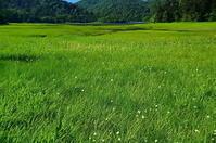 真夏の炎天下緑の楽園 - 風の香に誘われて 風景のふぉと缶