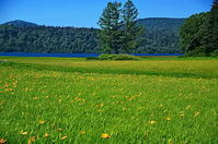 尾瀬沼ニッコウキスゲ - 風の香に誘われて 風景のふぉと缶