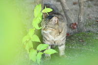 Happy Caturday - 猪こっと猛進